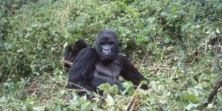 Ruhengeri, Rwanda. 2001